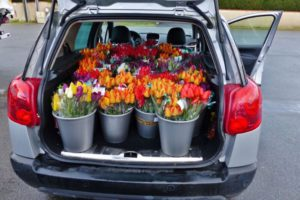 tulipes_bouquets